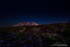 Mt St Helens Night Sky