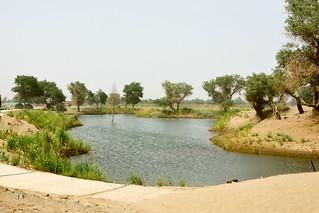 DSC_6563羅布人村寨_塔里木河畔 墩闊坦郷  尉犁縣