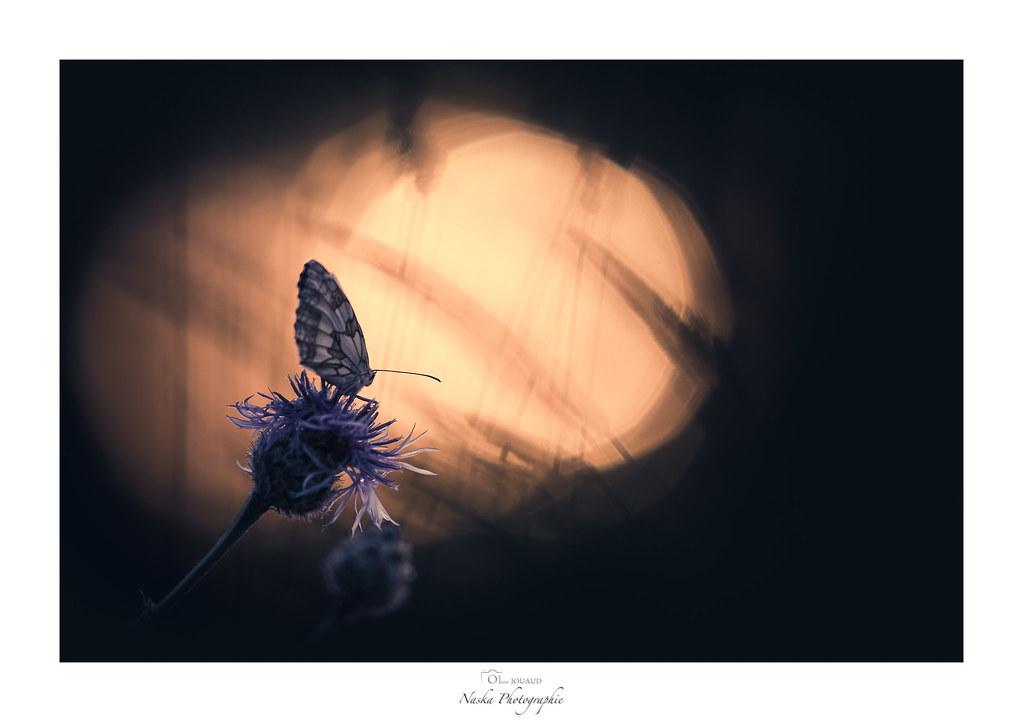 L'esprit fleur bleue