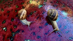 Meeting at a snails pace
