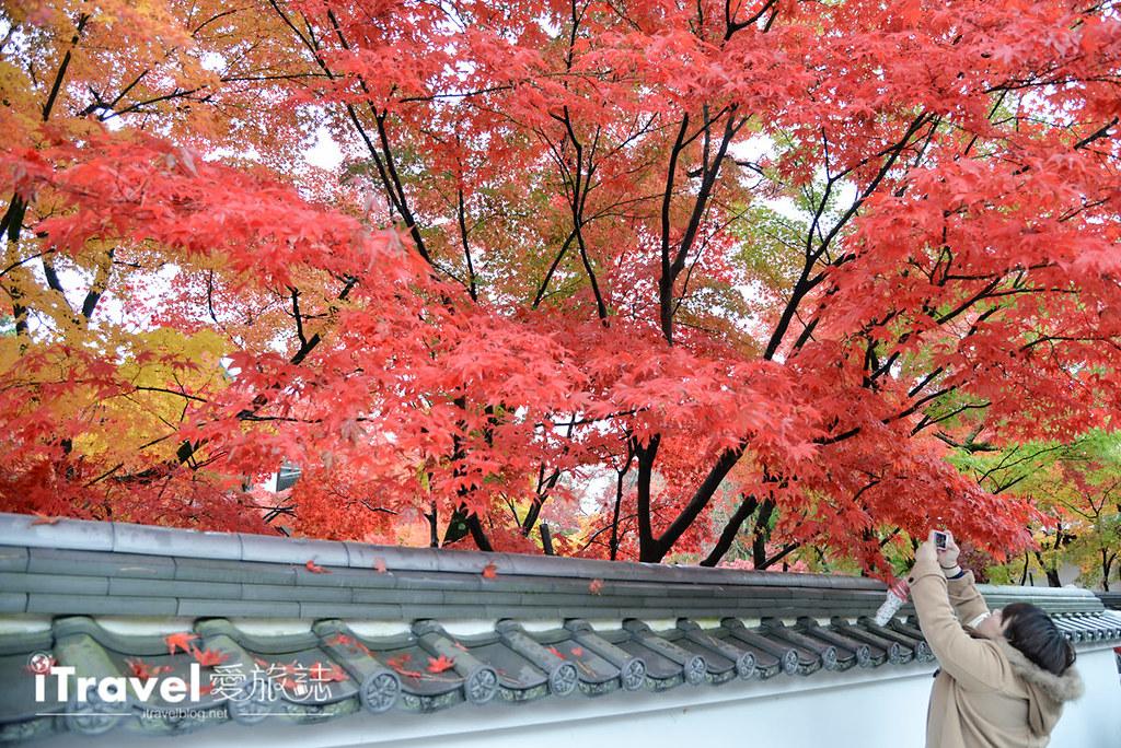 京都赏枫景点 永观堂 (7)