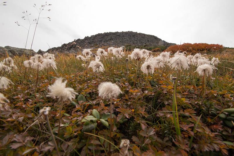 20150918-大雪山黒岳-0675.jpg