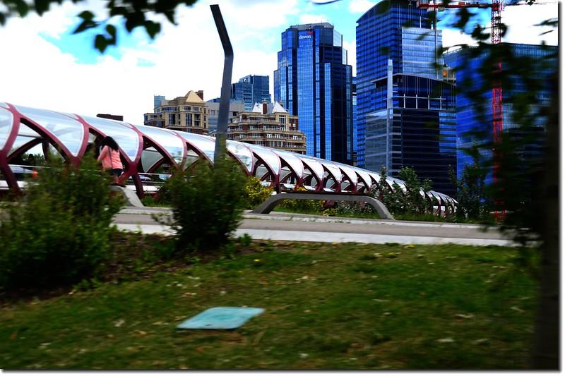 Calgary 7