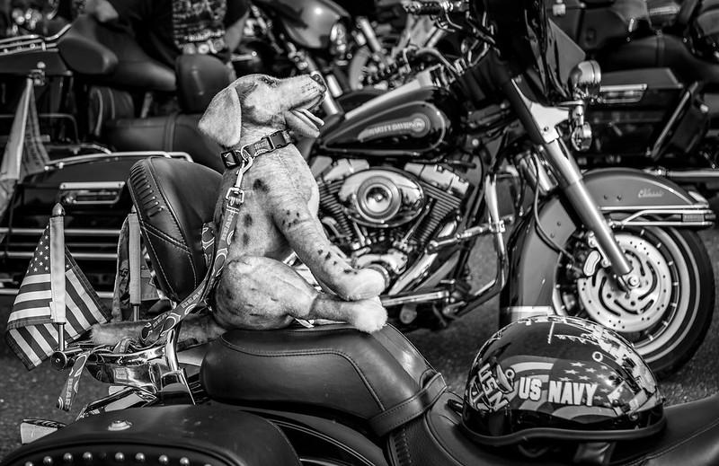 P12-Dog Rider