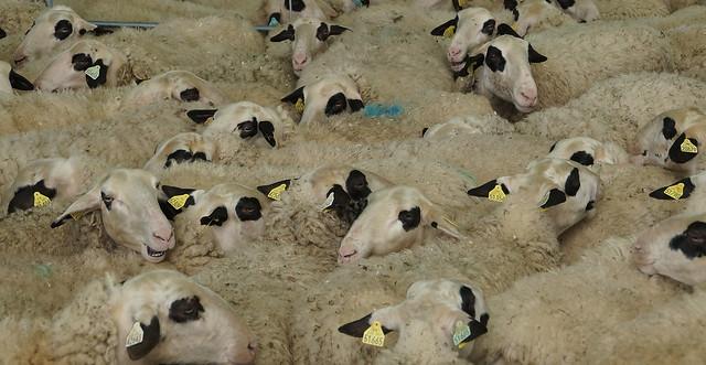 La mer de mouton, Sony SLT-A57, Tamron AF 28-105mm F4-5.6 [IF]