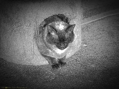 2017-06-11_P6110013_Paws,clwtr_B+W artistic,Black point0.335 2