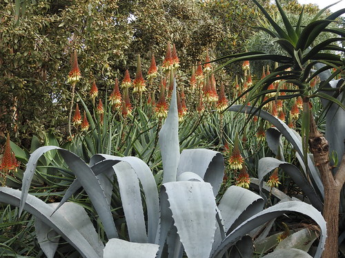Roraima Nursery and display garden (final set of 18 photos