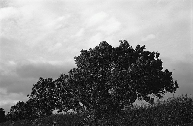 Tree Line P30 Ferrania HC110
