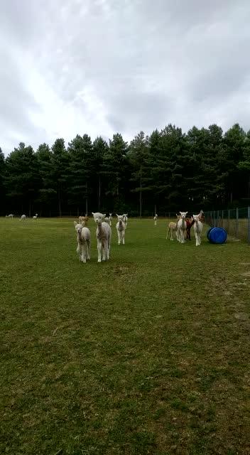 8cd89ce0-0335-4519-9403-38c3cd746f3e visitando la tierra de las alpacas - 35301713856 b109aa7e8c z - Visitando la tierra de las alpacas