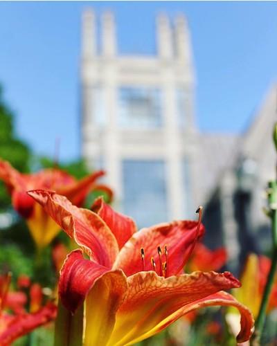 Happy belated #summersolstice. #pictureduke #dukeuniversity #summer // PC: @duke_sanford