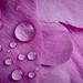 Pink Precipitation