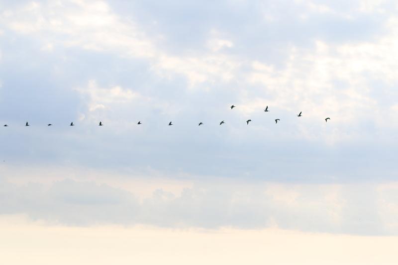 sky-birds-11