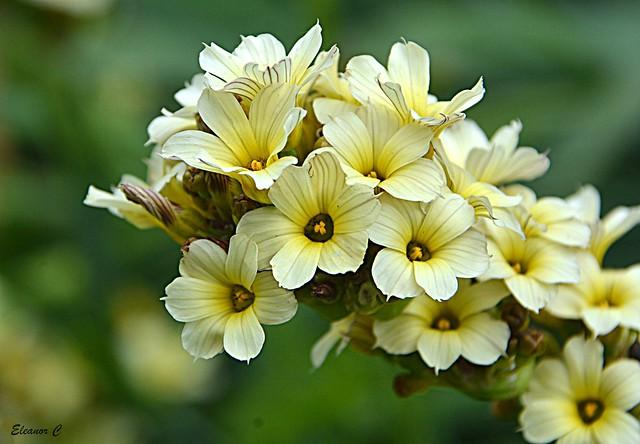 Thursday`s Flowers, Nikon D7100, AF-S DX Nikkor 18-300mm f/3.5-5.6G ED VR