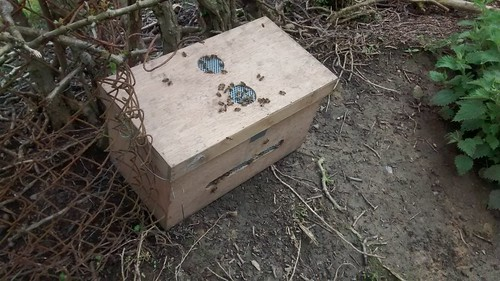 swarm box July 17