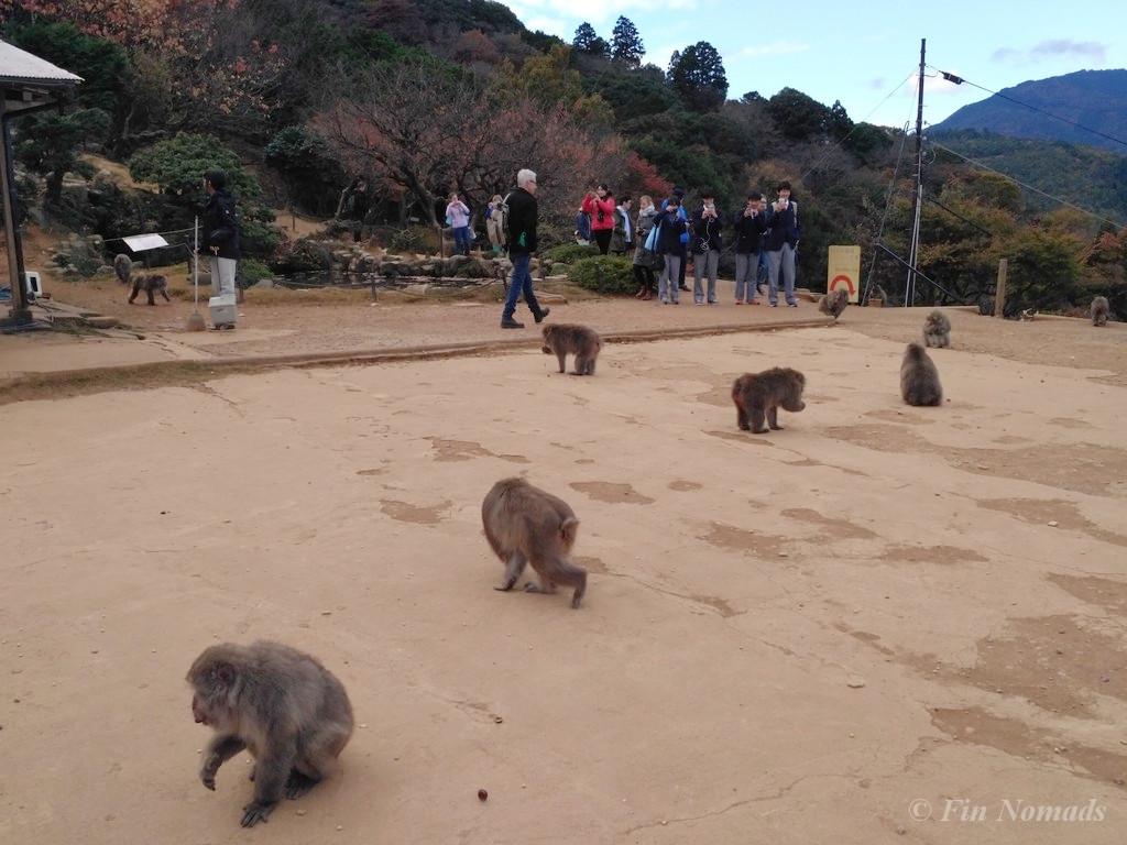 Arashiyama kyoto monkey 3
