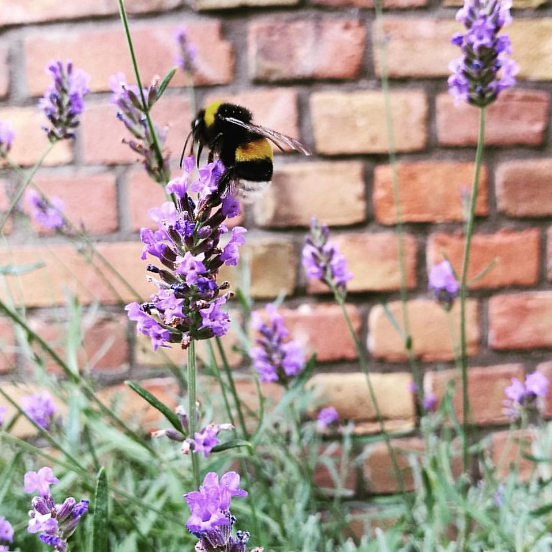 So good to see these little guys flying about 💕 #saveourbees #bees #beelove #summertime #summerlove #amsterdam #bee #honeybee
