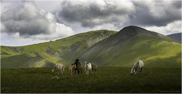 Wild Ponies on Llefn, Nikon D7200, AF-S Nikkor 17-35mm f/2.8D IF-ED