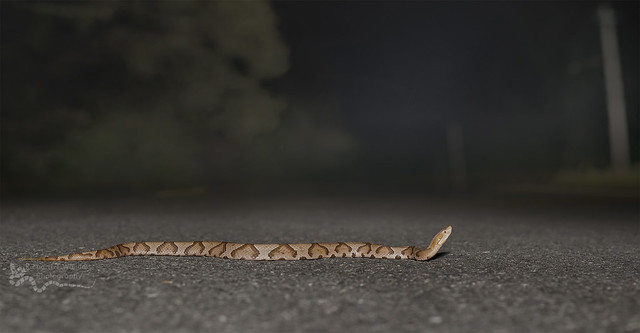 Copperhead Road, Nikon D800, Sigma 50mm F1.4 DG HSM | A