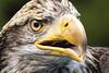 TRC Eagle 17.1