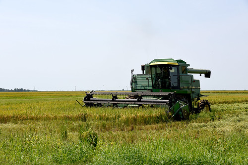 Rice Breeding Program