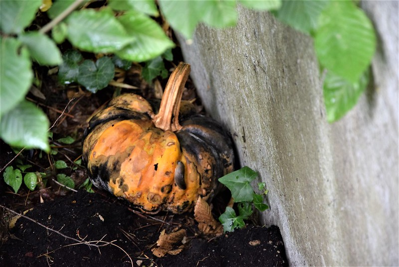Forgotten Pumpkin 09.o07.2017