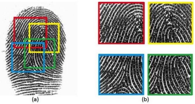 """Có một dạng """"vân tay chủ"""" có khả năng giả lập thành công một vân tay ngẫu nhiên với độ chính xác khoảng từ 26-65% số lần thử."""