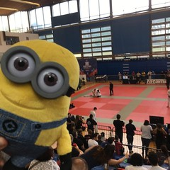 Little Dave's intrigued by this human pj wrestling! #ibjjf #britishnationals #bjjminion #competitor #mascot