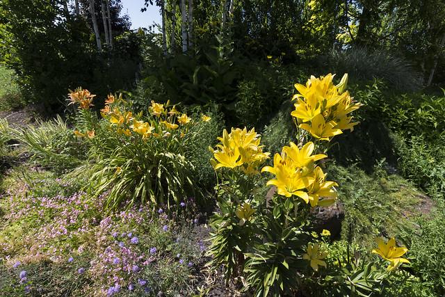 At the Oregon Garden, Nikon D7100, Sigma 24mm F1.8 EX DG Aspherical Macro