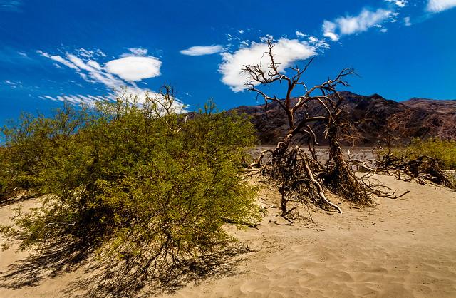 Terre aride dans la, Canon EOS 50D, Canon EF-S 10-22mm f/3.5-4.5 USM