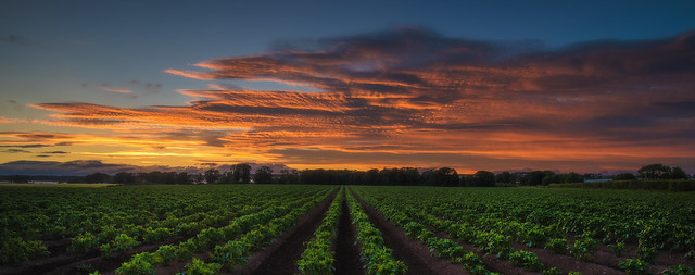 Carnoustie sunset, Nikon D750, AF-S Nikkor 20mm f/1.8G ED