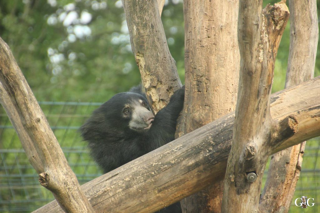 Zoo Besuch 11.07.201761