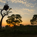 Sunrise in the Pantanal (Tim Melling)