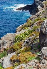 Ponta de S�o Louren�o peninsula, Madeira