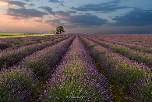 colors sky clouds countryside farmhouse field flowers france landscape nature provence summer sunrise valensole violet tree lavander