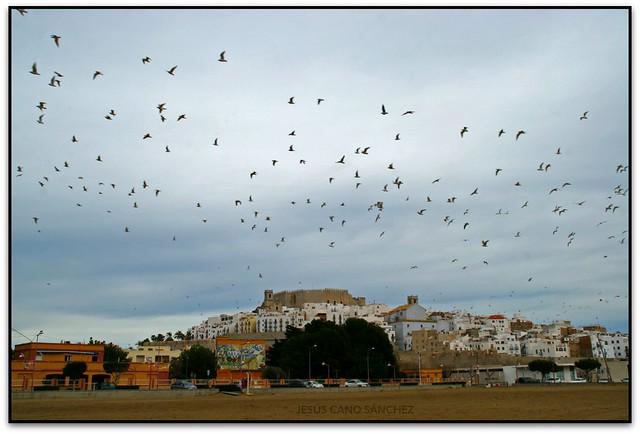 Los pájaros, Peníscola (Castelló, España)