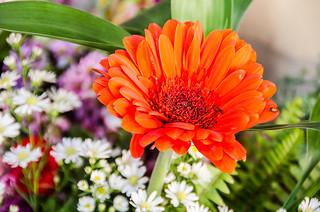 Flores com Leila Medina Presentes