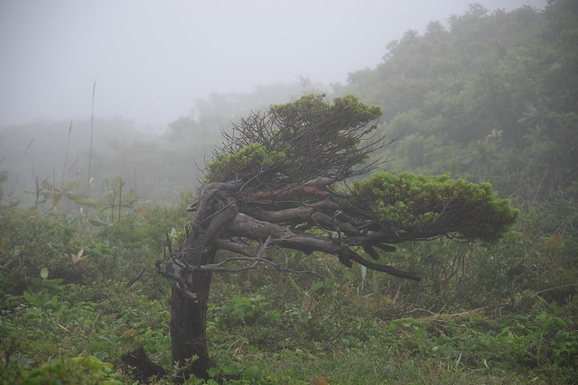 天売・焼尻2017_1_07