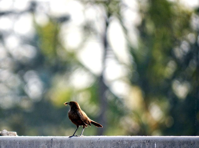 A bird all alone