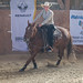 Working Cow Horse 2017