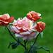 flores pastel 3