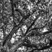 Branches por Ojo de Piedra