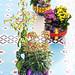 Mini-Kalanchoe bringen Farbe in den Wohnraum