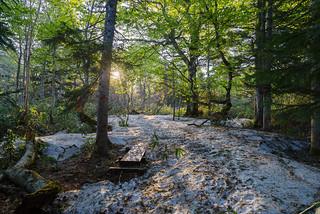 鳩待峠より横田代・アヤメ平へ・・・残雪の樹林帯を歩む