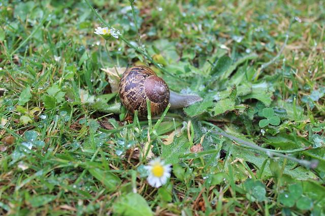 Slug....