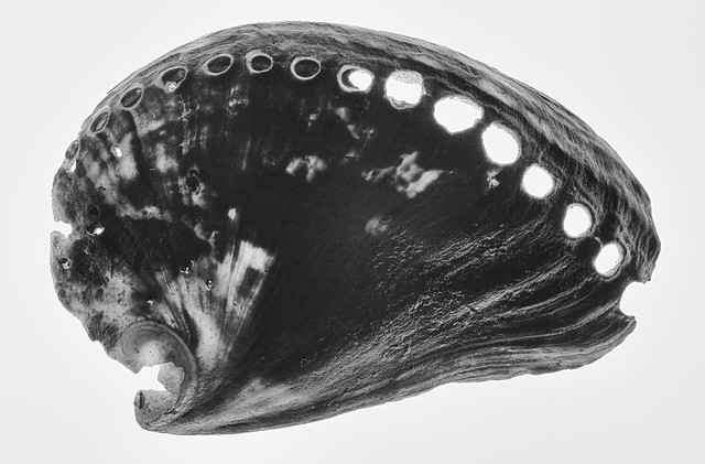 holey shell black and, Canon EOS 70D, Tamron SP AF 90mm f/2.8 Di Macro