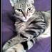 My Cat Phoenix