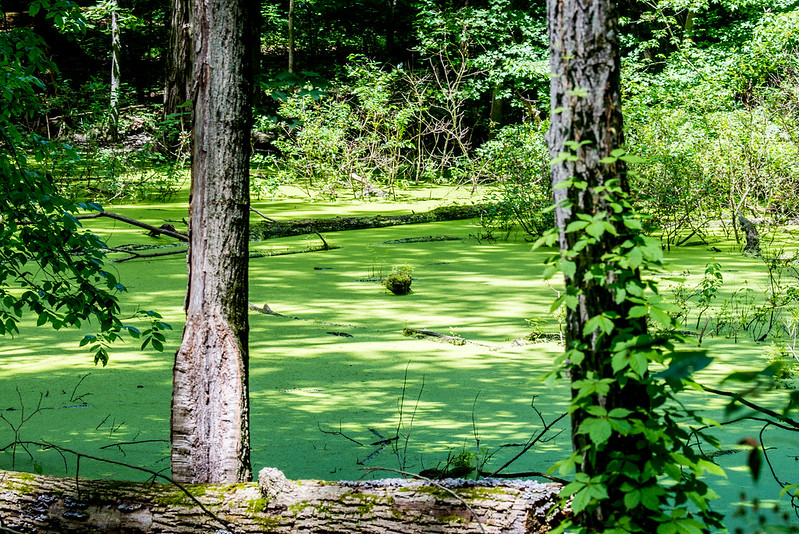 McClue Nature Preserve - June 20, 2017
