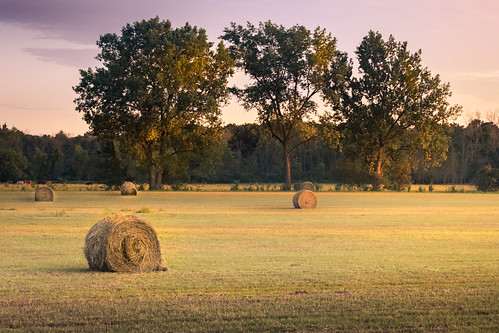 canoneos5dmarkiv hay hayfield camp field sunset evening golden goldenhour roundbale tree cow midmichigan mi michigan midland ef70200mmf4lusm