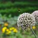Blüte mit Hummel in der Flora Köln von nekudo