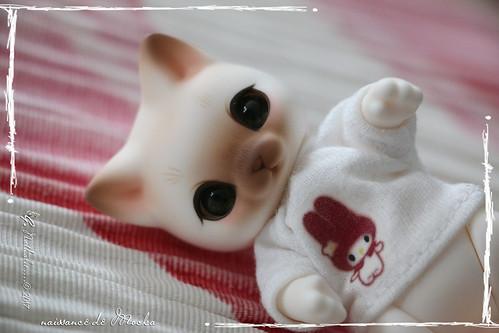 ✰ Ma famille de kitsune (p. 20) - Page 12 35637616835_8091db1306